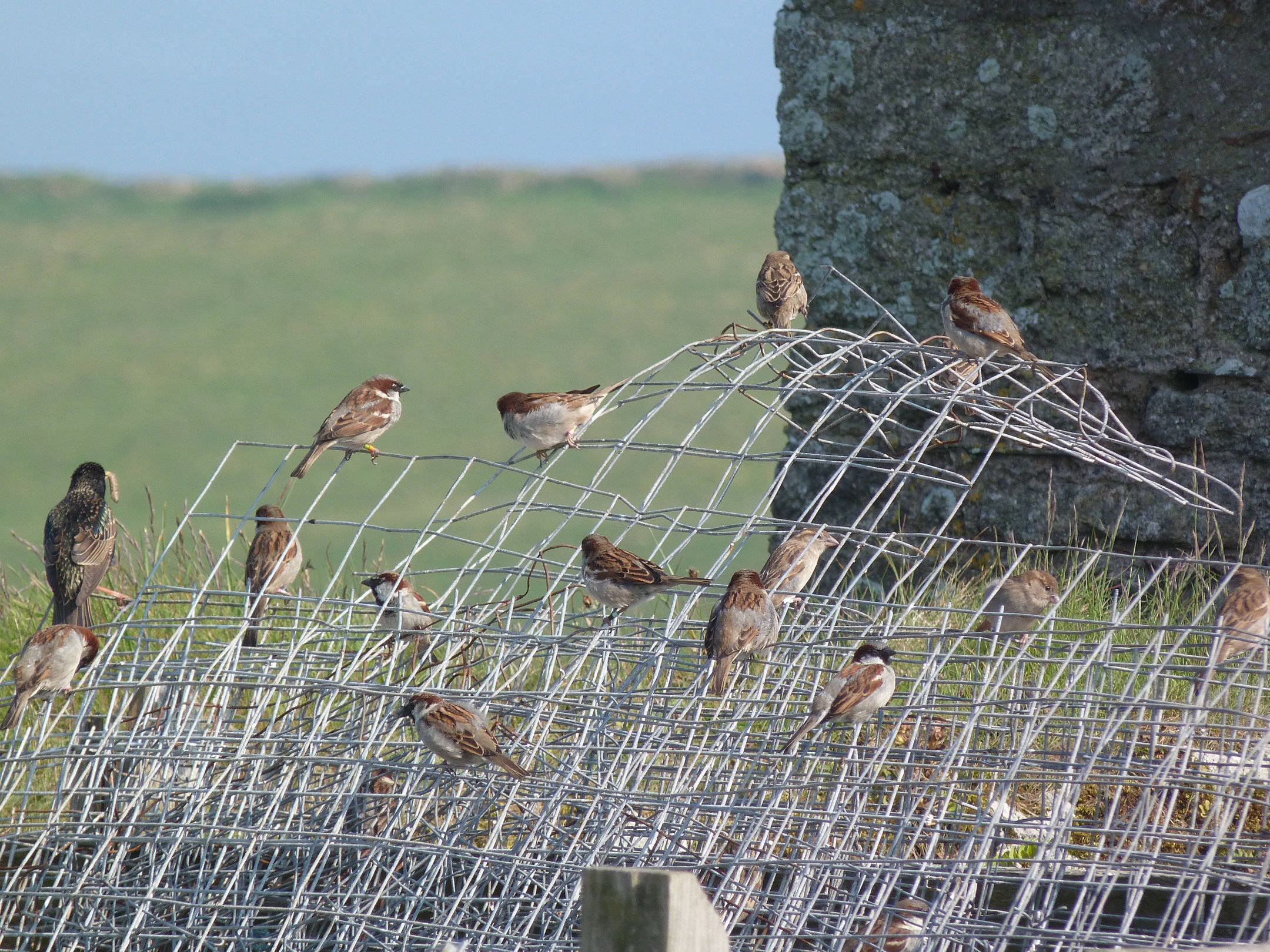 Photo: Isabel Winney (sparrows on a wire)
